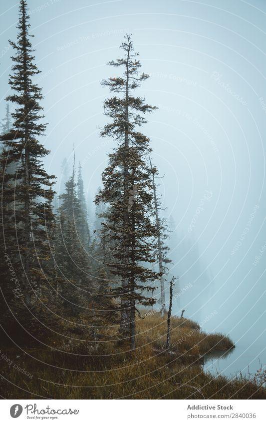 Bäume am felsigen Hang Landschaft Klippe Baum Herbst Wald herbstlich Farbe Natur prunkvoll friedlich Felsen Berge u. Gebirge Blatt ruhig Umwelt Wildholz