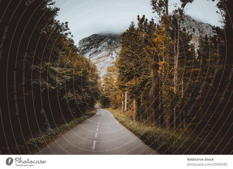Landschaft der Straße, die im Wald wegläuft. Fahrbahn geheimnisvoll abgelegen ländlich Umwelt Wege & Pfade biegend Ferien & Urlaub & Reisen Szene Länder