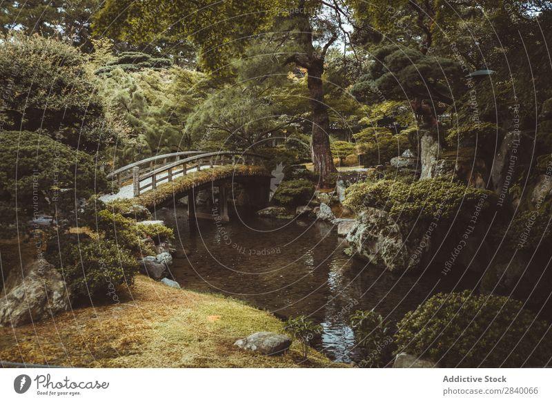 Kleine Brücke in grünem Wald Natur Wasser Fluss klein Aussicht Pflanze schön natürlich Jahreszeiten frisch Umwelt mehrfarbig Licht Sonnenlicht hell Länder