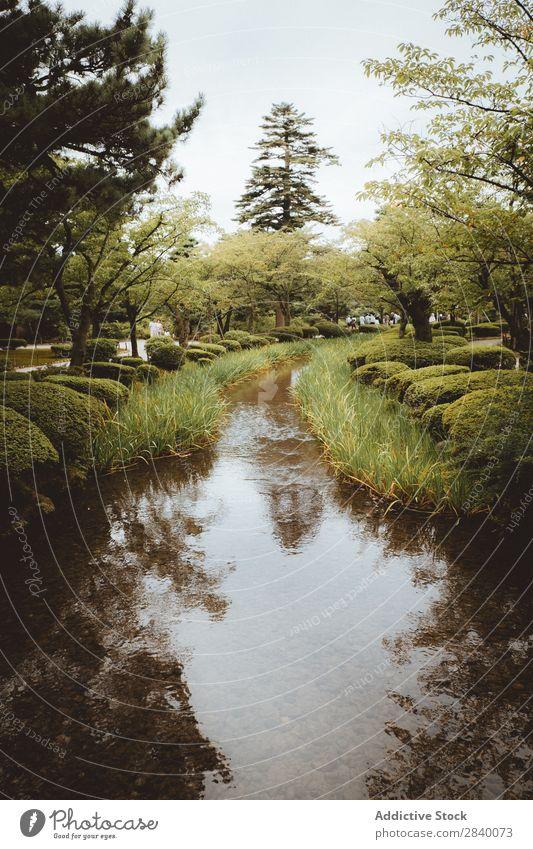 Kleiner Fluss im Park Natur grün Wasser klein Wald Aussicht Pflanze schön natürlich Jahreszeiten frisch Umwelt mehrfarbig Licht Sonnenlicht hell Länder ländlich
