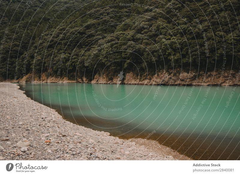 Blauer See am Hügel mit grünem Wald blau Küste Natur Aussicht Berge u. Gebirge Klippe Felsen Pflanze schön natürlich Jahreszeiten frisch Umwelt mehrfarbig Licht