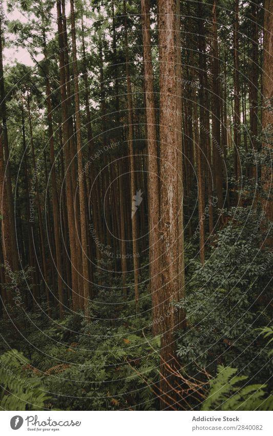 Landschaft mit ruhigen Herbstwäldern Wald Zauberei u. Magie Natur Nebel malerisch frisch Blatt Umwelt Jahreszeiten natürlich hell Sonnenstrahlen Morgen