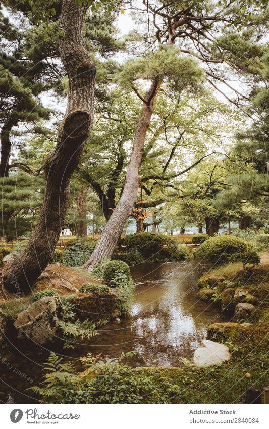Kleiner Fluss im hellen Wald Natur grün Wasser klein Aussicht Pflanze schön natürlich Jahreszeiten frisch Umwelt mehrfarbig Licht Sonnenlicht Länder ländlich