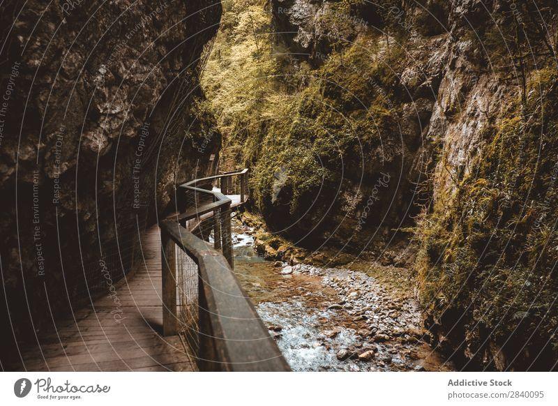 Holzsteg in der Schlucht Gang Natur grün Aussicht Geländer Berge u. Gebirge Hügel Klippe Felsen Pflanze schön natürlich Jahreszeiten frisch Umwelt mehrfarbig