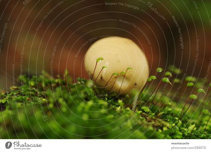 kuschelgruppe Natur grün Pflanze Blatt Wald Umwelt klein Blüte braun natürlich wild authentisch frisch ästhetisch weich rund