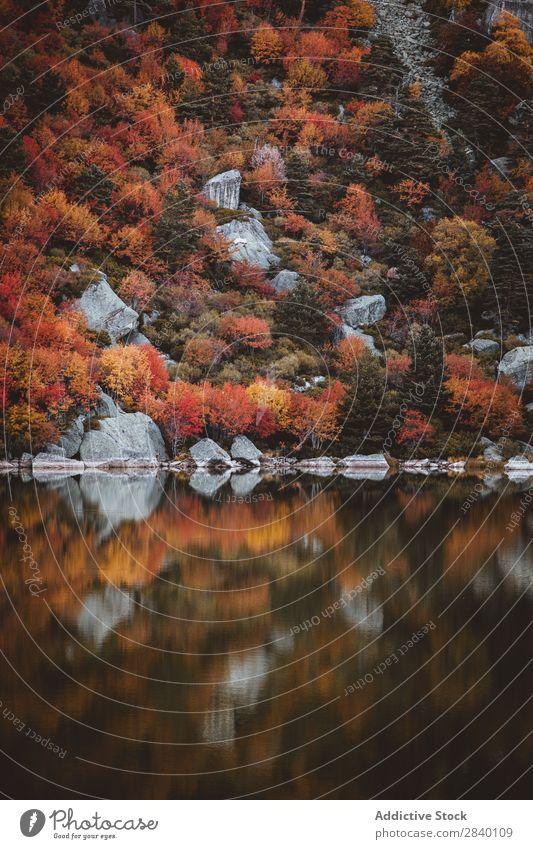 Hügel mit Herbstwald am See Teich Wald Natur grün Aussicht Berge u. Gebirge