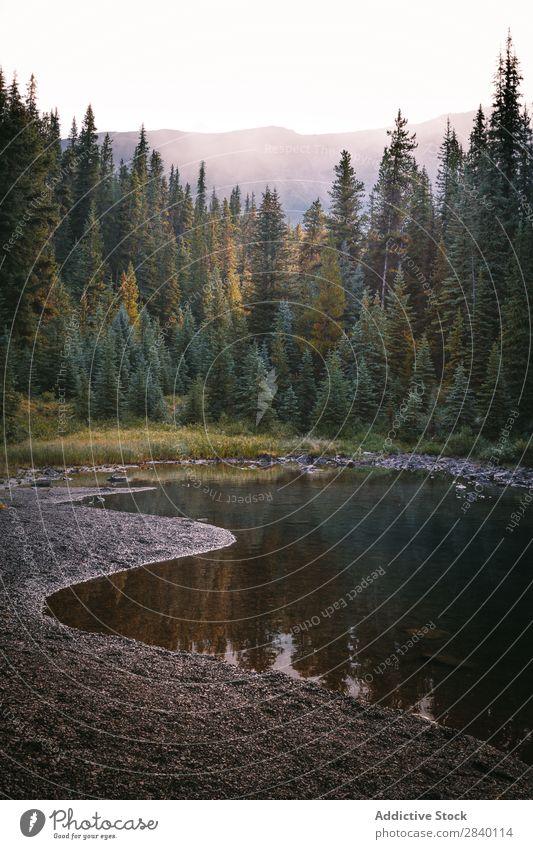 Kleiner Teich und Wald Baum Natur grün Aussicht Wasser klein Berge u. Gebirge Hügel Klippe Felsen Pflanze schön natürlich Jahreszeiten frisch Umwelt mehrfarbig