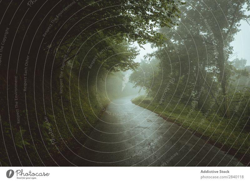 Straße in nebligen Wäldern Asphalt Natur grün Aussicht Nebel Pflanze schön natürlich Jahreszeiten frisch Umwelt nass Morgen Wald mehrfarbig Licht Sonnenlicht