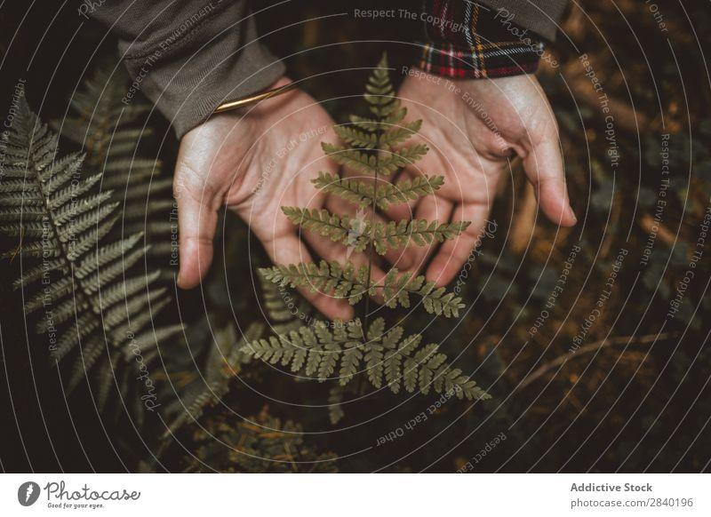 Person, die das Farnblatt hält Blatt Mensch Pflanze grün Natur organisch Jahreszeiten frisch Wachstum botanisch Biologie Beautyfotografie wild Kräuterbuch