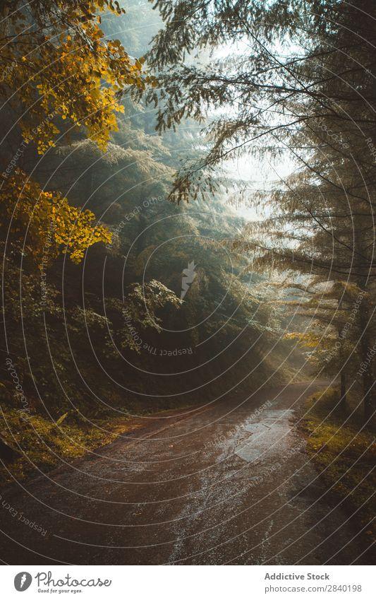 Bäume auf beiden Seiten des Weges Baum Wege & Pfade Herbst Natur Wald Landschaft Straße Jahreszeiten Blatt schön Orange Holz Tag nass Asphalt wild friedlich
