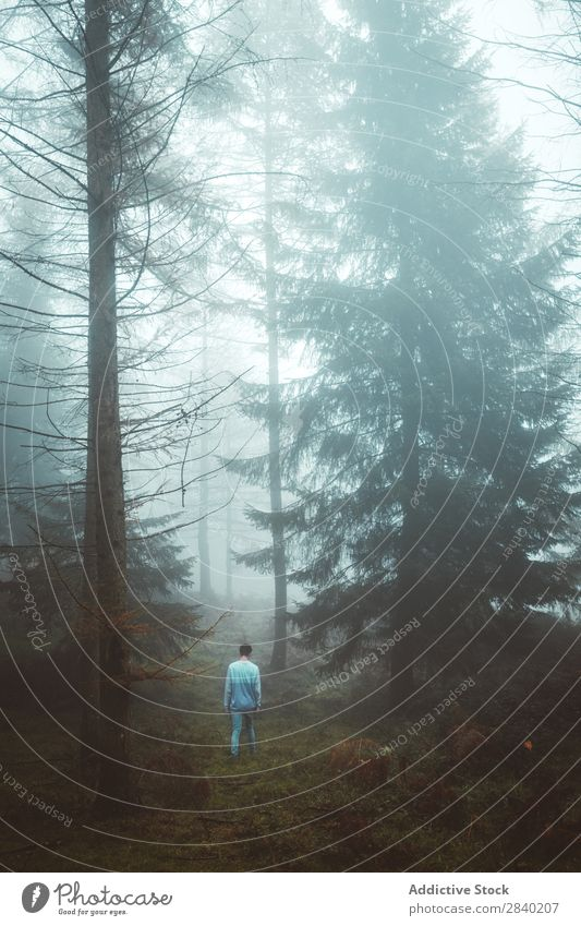 Mann geht durch den nebligen Wald. laufen Nebel Natur Landschaft Herbst Mensch Mysterium Jahreszeiten Angst Einsamkeit spukhaft Aussicht trist Szene wild