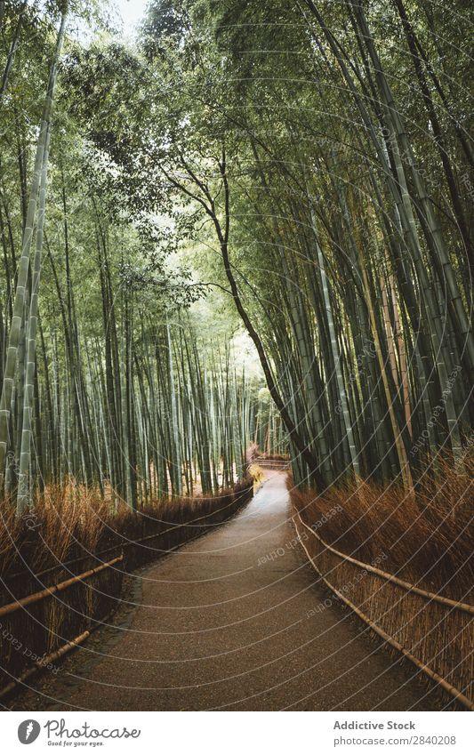 Pfad im Bambuswald Wald Wege & Pfade grün Natur Asien Wahrzeichen Straße Wachstum Park Pflanze Kultur Arashiyama Japan Umwelt Kyoto ökologisch