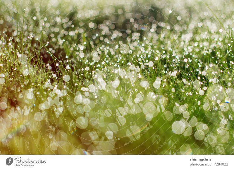paint the ocean with the tracks of my tears Natur grün Wiese Herbst Gras außergewöhnlich Wetter gold glänzend Klima frisch nass Wassertropfen Tau Umweltschutz
