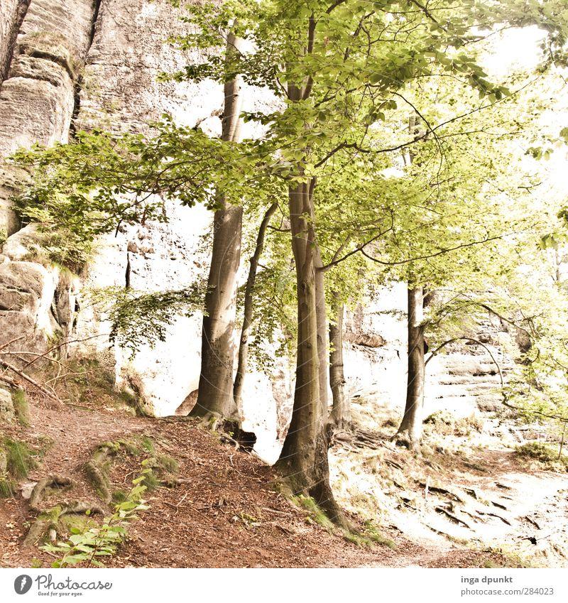 lichter Laubwald Natur Pflanze Sommer Baum Landschaft ruhig Umwelt Zufriedenheit Bundesadler Umweltschutz Inspiration Belichtung Sachsen Nationalpark