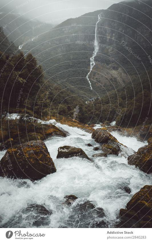 Wasserstrom in den Bergen Fluss Geschwindigkeit Berge u. Gebirge Geplätscher strömen Kaskade Bewegung Wald nadelhaltig Umwelt Felsen Dunst frisch extrem