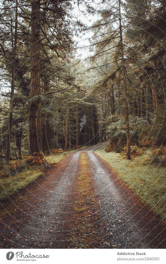 Straße, die zwischen immergrünen Bäumen verläuft. Wald Wetter Natur nadelhaltig Weg Landschaft ruhig Zauberei u. Magie Jahreszeiten Außenaufnahme Baum reisend