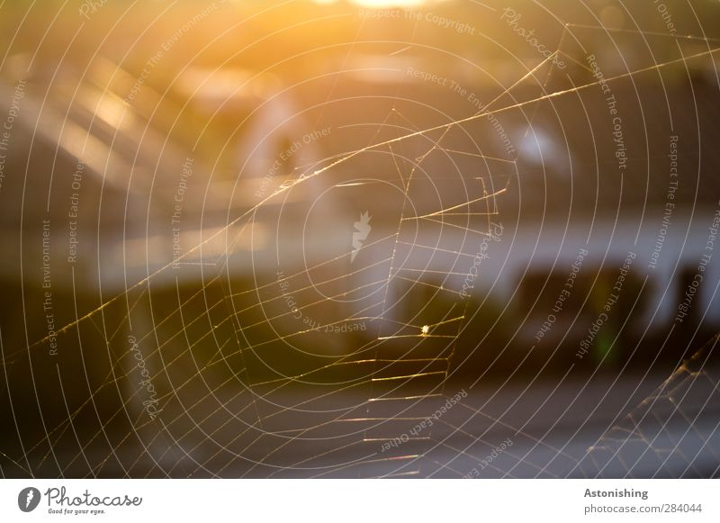 sehr fein! Natur Sonne Sonnenaufgang Sonnenuntergang Sonnenlicht Herbst Wärme Wien Stadt Straße Tier Spinne Spinnennetz Netz ästhetisch dünn gelb gold orange