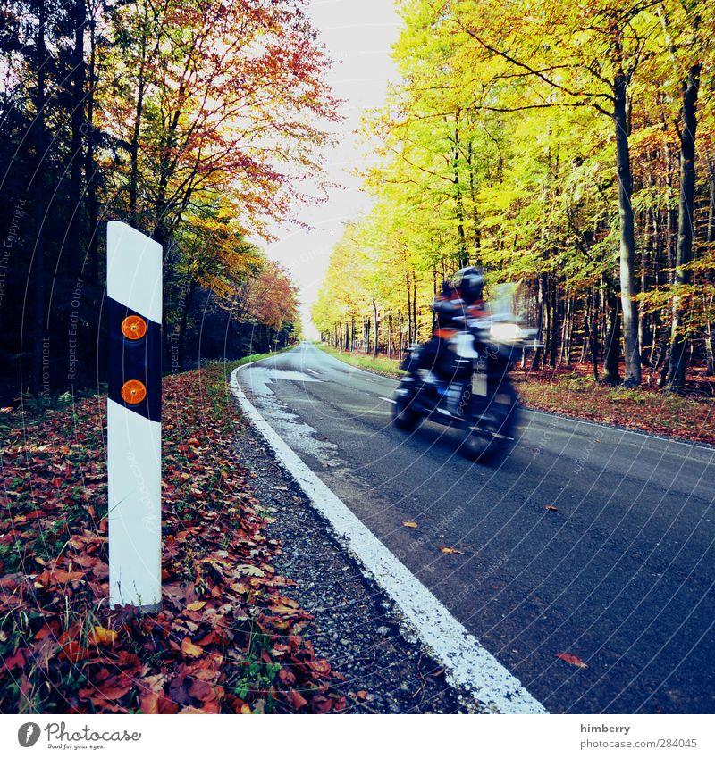 kurvenräuber Mensch Sommer Blatt Wald Straße Herbst Freiheit Stil Fahrrad Freizeit & Hobby Energiewirtschaft Verkehr Tourismus Zukunft Geschwindigkeit Ausflug
