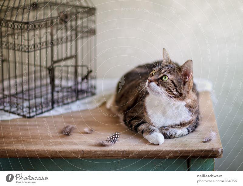 Ich kriege dich! Katze weiß Tier Holz grau Metall braun liegen warten Feder beobachten retro Ziel Neugier Appetit & Hunger fangen