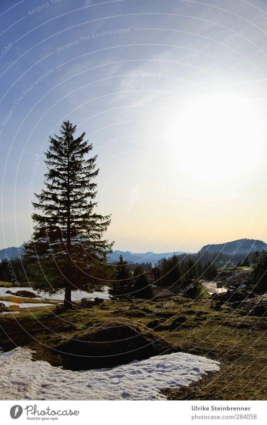 Frühling am Säntis Himmel Natur Ferien & Urlaub & Reisen Pflanze Baum Landschaft Umwelt Wiese Berge u. Gebirge Schnee Gras Felsen natürlich Wachstum Tourismus