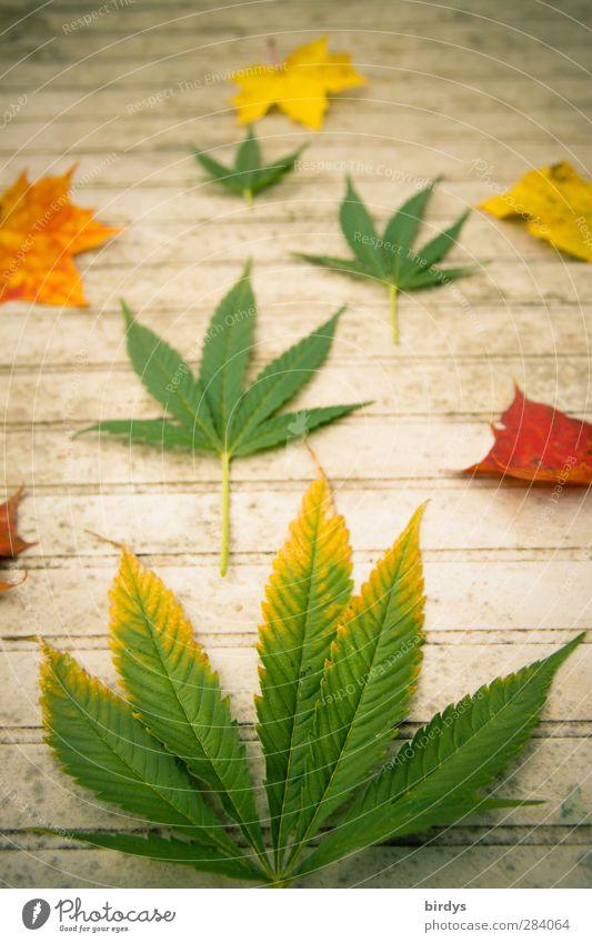 Jamaican autumn Tisch Herbst Hanf Blatt Ahornblatt Cannabisblatt leuchten außergewöhnlich positiv rebellisch schön Lebensfreude Wandel & Veränderung