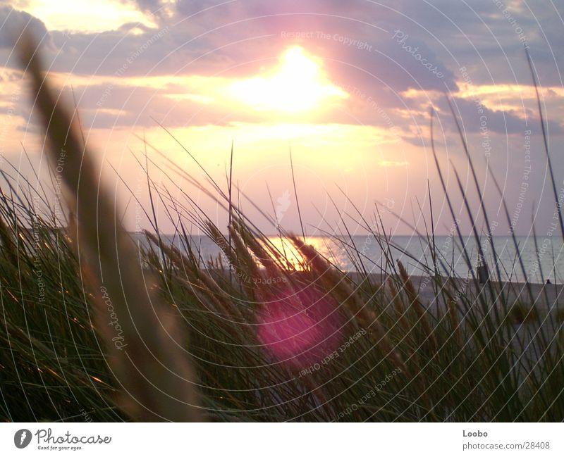 sommmer sonne sonnenschein Sonnenuntergang Niederlande Strand Meer See Stranddüne Sunflare Nordsee Banjaard Camperland