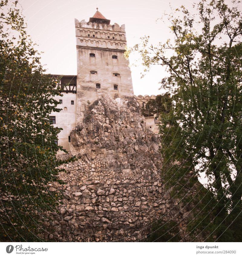 Bran Castle Siebenbürgen Rumänien Dracula Vampir Burg oder Schloss Bauwerk Gebäude Architektur Sehenswürdigkeit alt außergewöhnlich bedrohlich Farbfoto