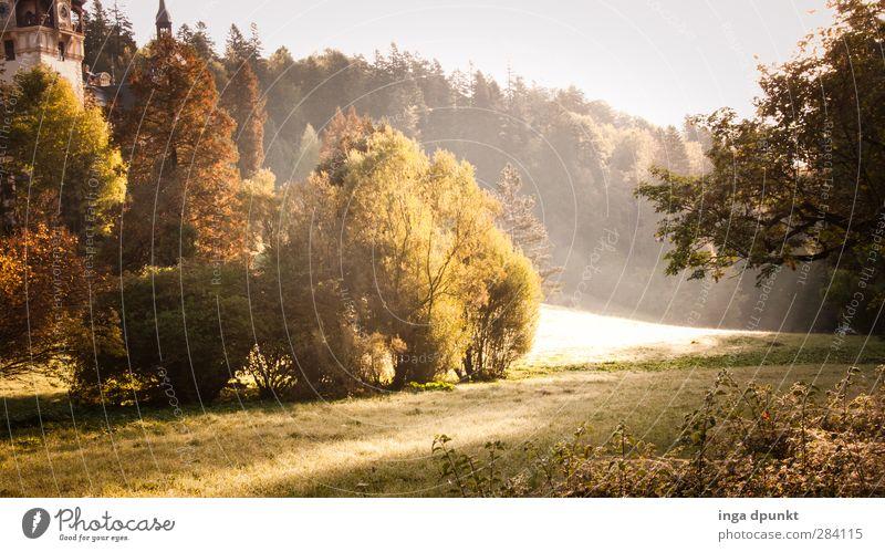 Waldlichtung Umwelt Natur Landschaft Pflanze Sommer Herbst Schönes Wetter Baum Wiese Hügel frisch natürlich schön Abenteuer Erholung Freizeit & Hobby