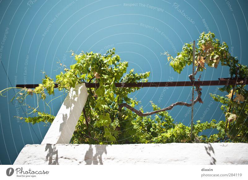 let's pass some time Ferien & Urlaub & Reisen Tourismus Sommer Sommerurlaub Himmel Wolkenloser Himmel Sonnenlicht Klima Wetter Schönes Wetter Pflanze