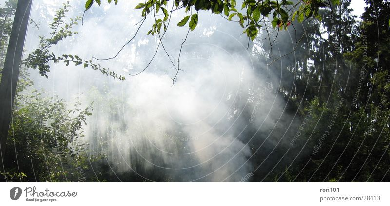 the fog weiß Baum grün Blatt Wald Beleuchtung Nebel Rauch