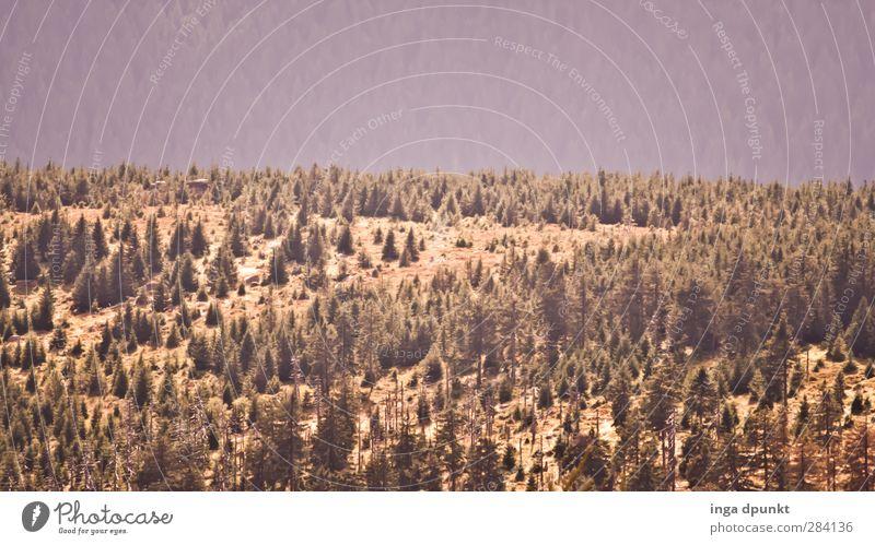Waldlandschaft Natur schön Baum Landschaft Erholung Wald Umwelt Berge u. Gebirge Herbst natürlich Tourismus Hügel fantastisch Umweltschutz Umweltverschmutzung Fichte