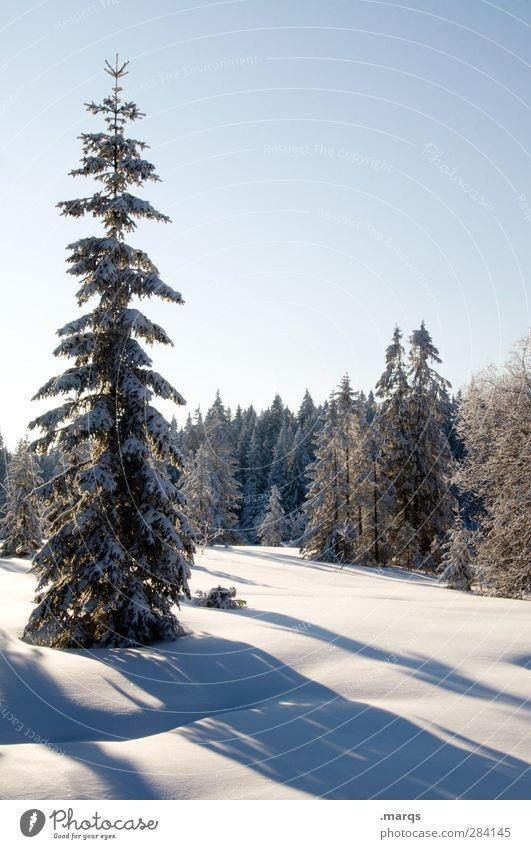 Naturbelassen Landschaft Urelemente Wolkenloser Himmel Winter Schönes Wetter Schnee Baum Nadelbaum Wald schön kalt Farbfoto Außenaufnahme Menschenleer