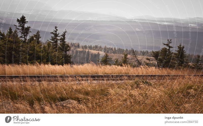 Brockenbahn Umwelt Natur Landschaft Pflanze Herbst schlechtes Wetter Wind Grasland Fichte Harz Mittelgebirge Bundesadler Tourismus Reisefotografie