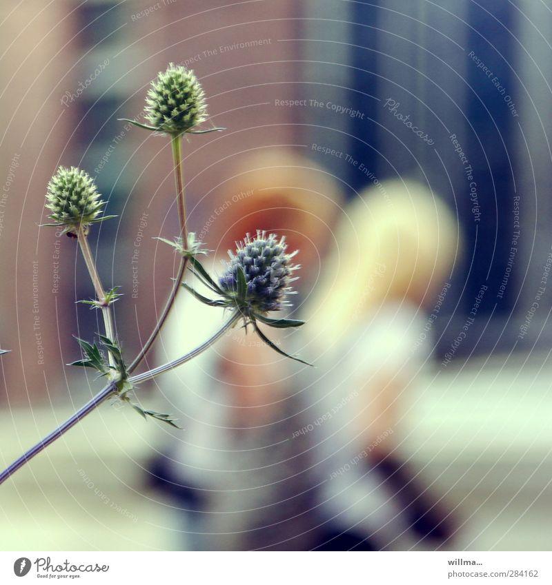 Disteln vor zwei Fußgängerinnen in der Stadt Jugendliche Pflanze Große Klette brünett blond Spitze Kommunizieren stechen Widerhaken stur Stachel 2 junge Mädchen