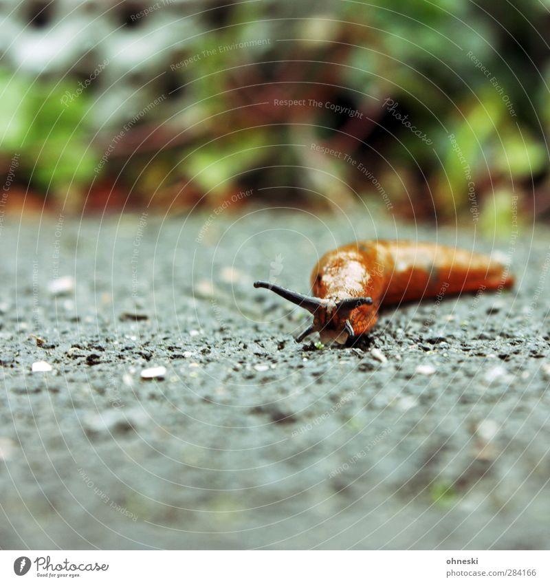 Immer mit der Ruhe Natur Tier Gelassenheit Schnecke Fühler geduldig langsam