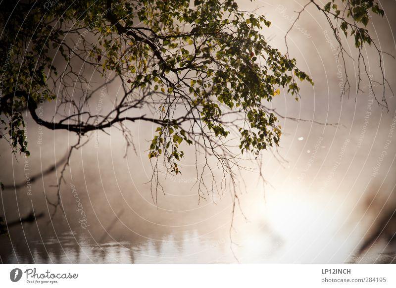 Schwedisch. Angeln Ferien & Urlaub & Reisen Tourismus Ausflug Abenteuer Sommer Sommerurlaub Baum Wald Küste See Schweden Wasser hell Trauer Einsamkeit Erholung