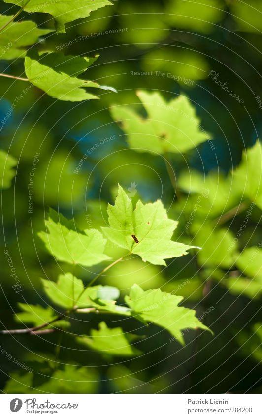Light my way Natur Sommer Pflanze Baum Blatt Umwelt Freiheit Garten Erde Park authentisch Schönes Wetter Perspektive ästhetisch einzigartig Netzwerk