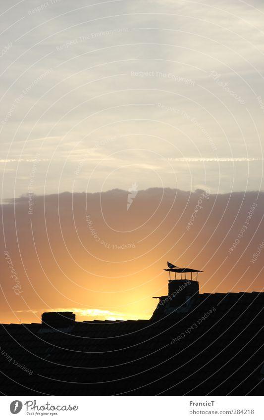 früh am Morgen Himmel Stadt Sonne Tier Wolken schwarz Haus gelb Ferne Wärme Herbst oben Gebäude Vogel Stimmung braun