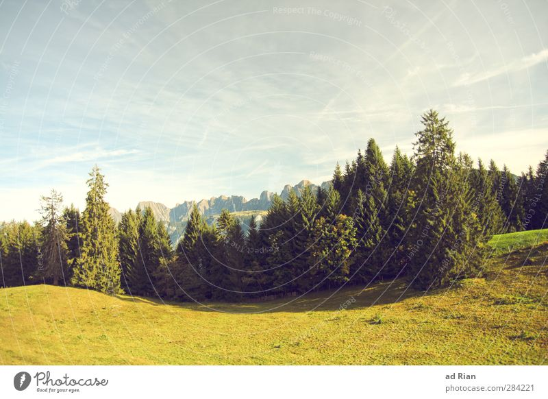 Lebensraum Natur Baum ruhig Landschaft Wald Berge u. Gebirge Herbst Gras Bewegung Park natürlich Feld Klima Freizeit & Hobby Zufriedenheit wandern