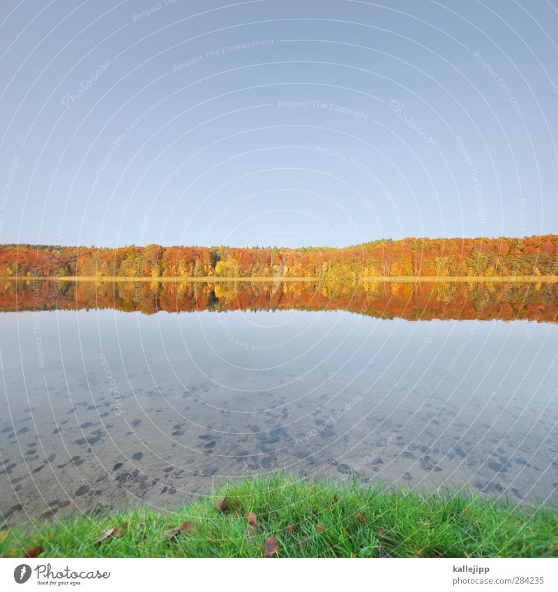 tornowsee Natur Ferien & Urlaub & Reisen Wasser Pflanze Baum Tier Blatt Landschaft Wald Ferne Umwelt Herbst Freiheit See Luft Horizont