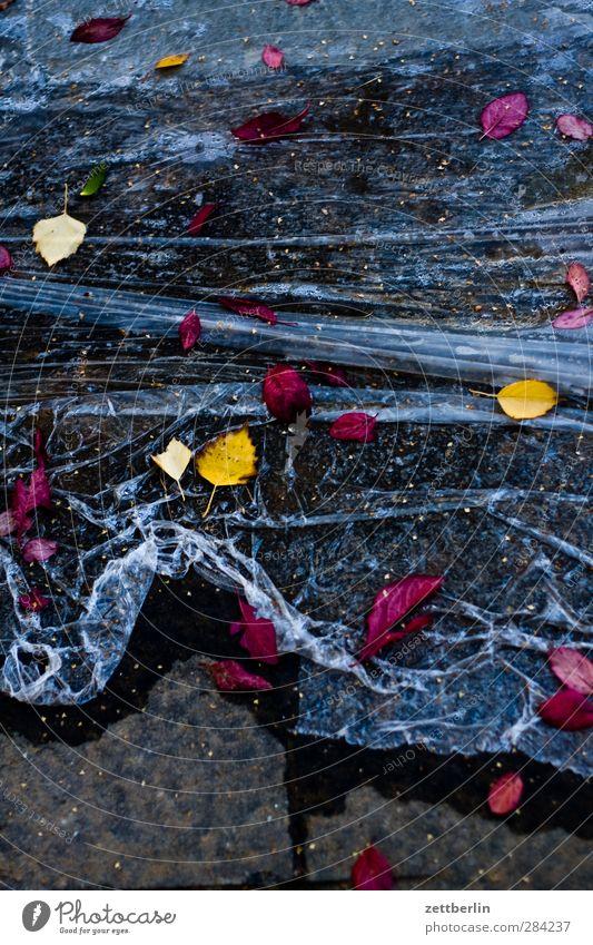Herbst Baustelle Umwelt Natur Klima Klimawandel Wetter schlechtes Wetter Blatt Stadt nass Sehnsucht Heimweh Fernweh Enttäuschung Abdeckung erde Folie Herbstlaub