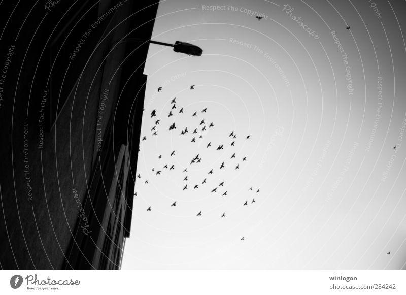 angry birds Natur alt Stadt weiß schwarz dunkel Gefühle oben Gebäude Autofenster Vogel träumen Stimmung fliegen Angst wild