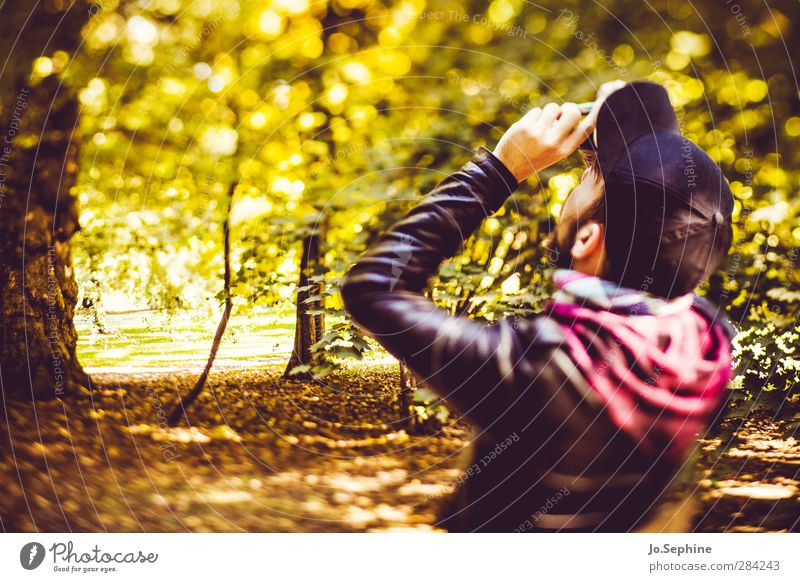 hold on to those golden times Lifestyle Stil Freizeit & Hobby Fotografieren Mensch maskulin Junger Mann Jugendliche Erwachsene 1 18-30 Jahre Umwelt Natur Wald