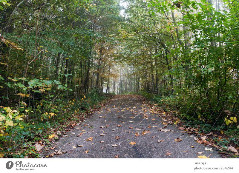 Ausweg Ausflug Umwelt Natur Herbst Klima Nebel Pflanze Baum Blatt Wald Straße Wege & Pfade einfach natürlich Perspektive Farbfoto Außenaufnahme Menschenleer