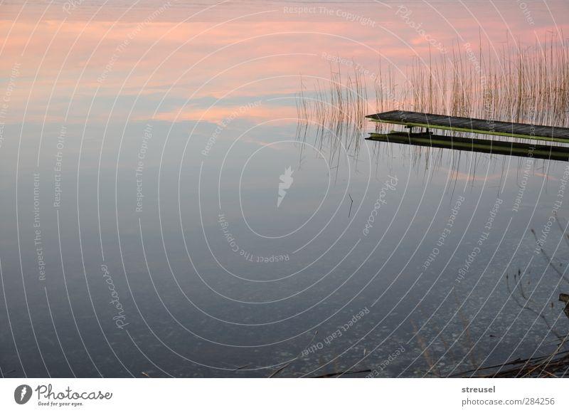 noch nicht Winter Umwelt Natur Landschaft Urelemente Wasser Wolken Horizont Sonnenaufgang Sonnenuntergang Herbst Schönes Wetter Seeufer Waginger See rosa