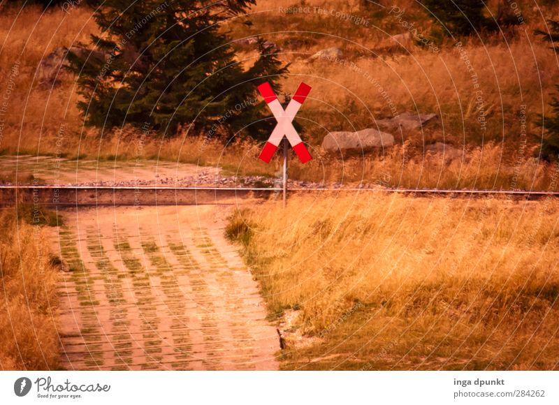 der schmale BahnRübergang Umwelt Natur Landschaft Pflanze Baum Gras Wald Harz Mittelgebirge Bundesadler Schmalspurbahn Gleise Schienenverkehr Bahnübergang