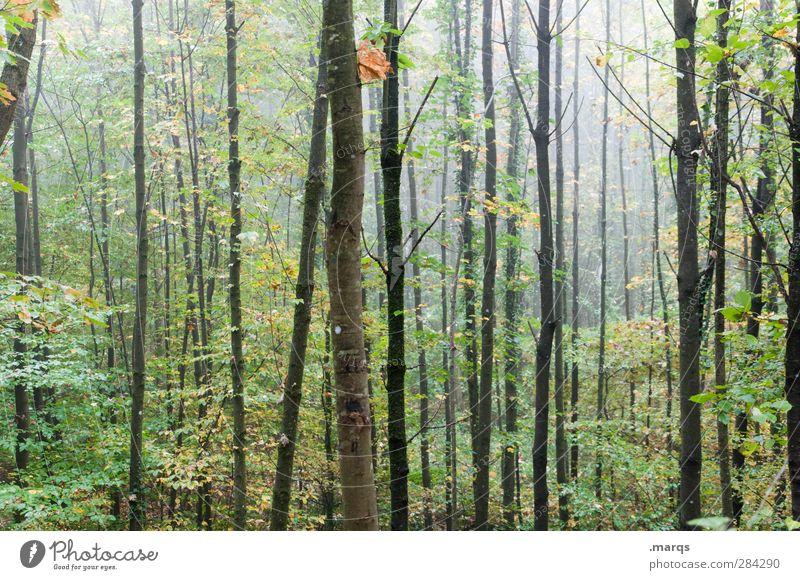 Dickicht Umwelt Natur Luft Herbst Klima Klimawandel Nebel Baum Laubwald Wald kalt nass Biotop Baumstamm Farbfoto Außenaufnahme Menschenleer Morgendämmerung