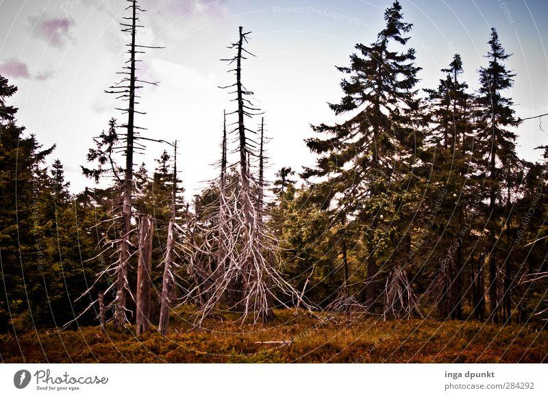 Der Borkenkäfer Natur Pflanze Baum Landschaft Wald Umwelt Deutschland Umweltschutz Nadelbaum Harz Brocken Mittelgebirge Sachsen-Anhalt Fichtenwald