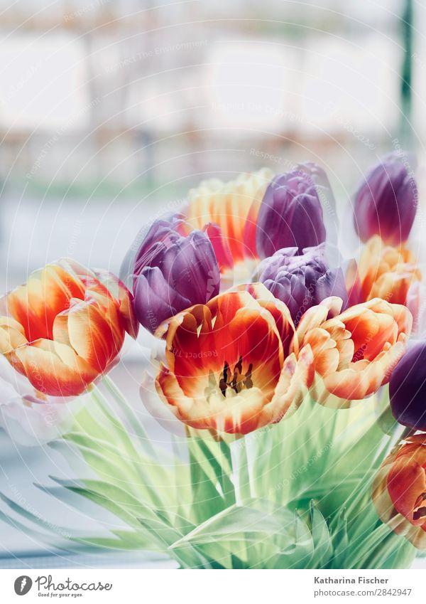 Tulpen Blumen Frühling Kunst Natur Sommer Herbst Winter Pflanze Blatt Blüte Blumenstrauß Blühend leuchten schön gelb gold grün violett orange rosa rot türkis
