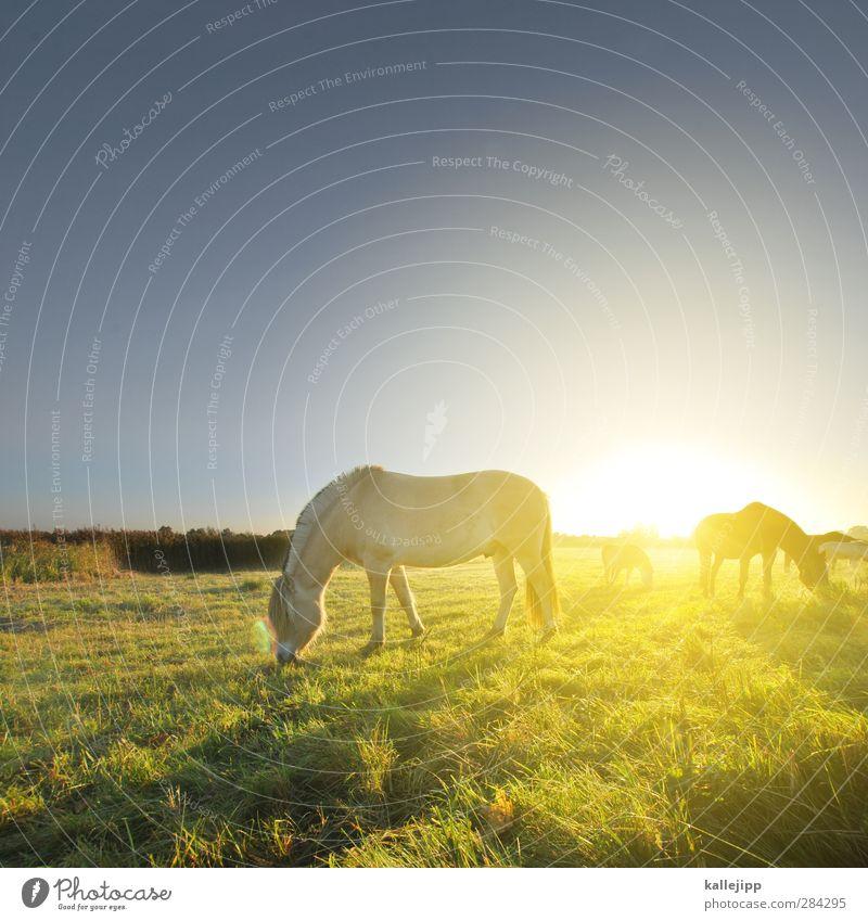 apotheken poster Umwelt Natur Landschaft Herbst Schönes Wetter Wiese Feld Tier Nutztier Pferd 3 Herde Romantik schön Weide Tag Licht Schatten Kontrast